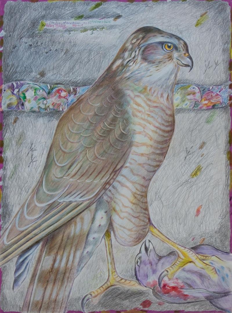 Greifvogelbeutetier, 1981