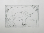 160 Rhinozeros, 1984